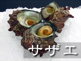 【お届け日指定不可】サザエ【鳥取県・兵庫県産】(1個:約60g) 冷蔵便