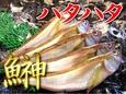 【お届け日指定不可】ハタハタ(白ハタ)【鳥取県・兵庫県産】1尾:約40g 冷蔵便