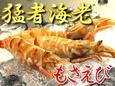 【お届け日指定不可】モサエビ(クロザコエビ)【鳥取県・兵庫県産】約100g(5~8尾)冷蔵便