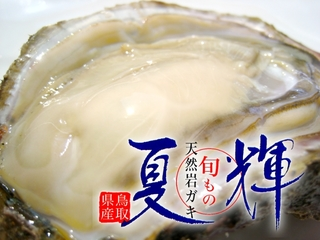 〔先行予約〕鳥取産天然岩牡蠣『夏輝』バラ売り