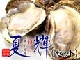 〔先行予約〕鳥取産天然岩牡蠣『夏輝』セット売り【送料無料】