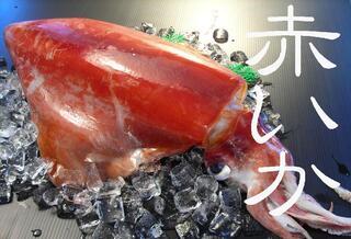 冷凍赤イカ(ソデイカ)〔皮むき済・短冊切り〕1kg分 送料無料