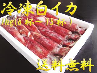 冷凍白イカ(ケンサキイカ) 1kg(8~15杯入)【鳥取県・兵庫県産】送料無料・冷凍便