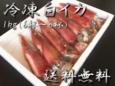 冷凍白イカ(ケンサキイカ)1kg(6~8杯入)【鳥取県・兵庫県産】送料無料・冷凍便