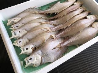 訳ありイテカレイ干物【鳥取県・兵庫県産】1kg・送料無料 冷凍便