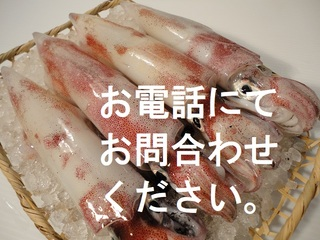 ★季節限定★白イカ(剣先イカ)セット売り【送料無料】