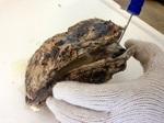 岩ガキの殻の開け方